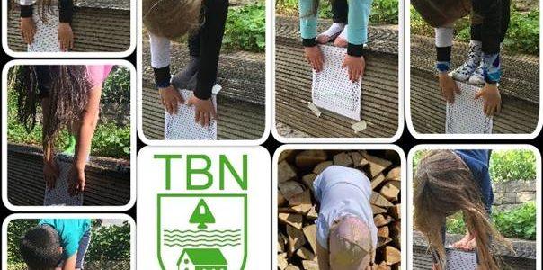 TBN-Turnnachwuchs erfolgreich bei STB Talentiade@home